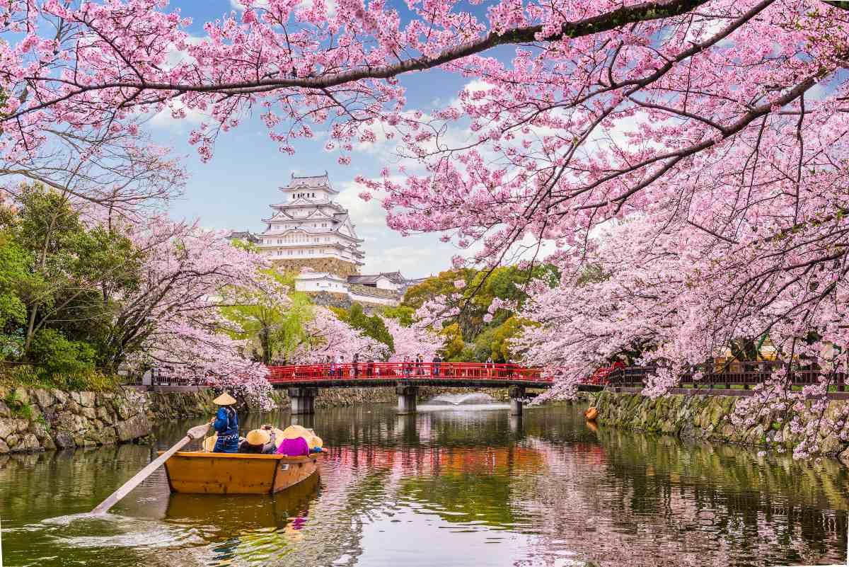 Ανθισμένες κερασιές ,Ιαπωνία
