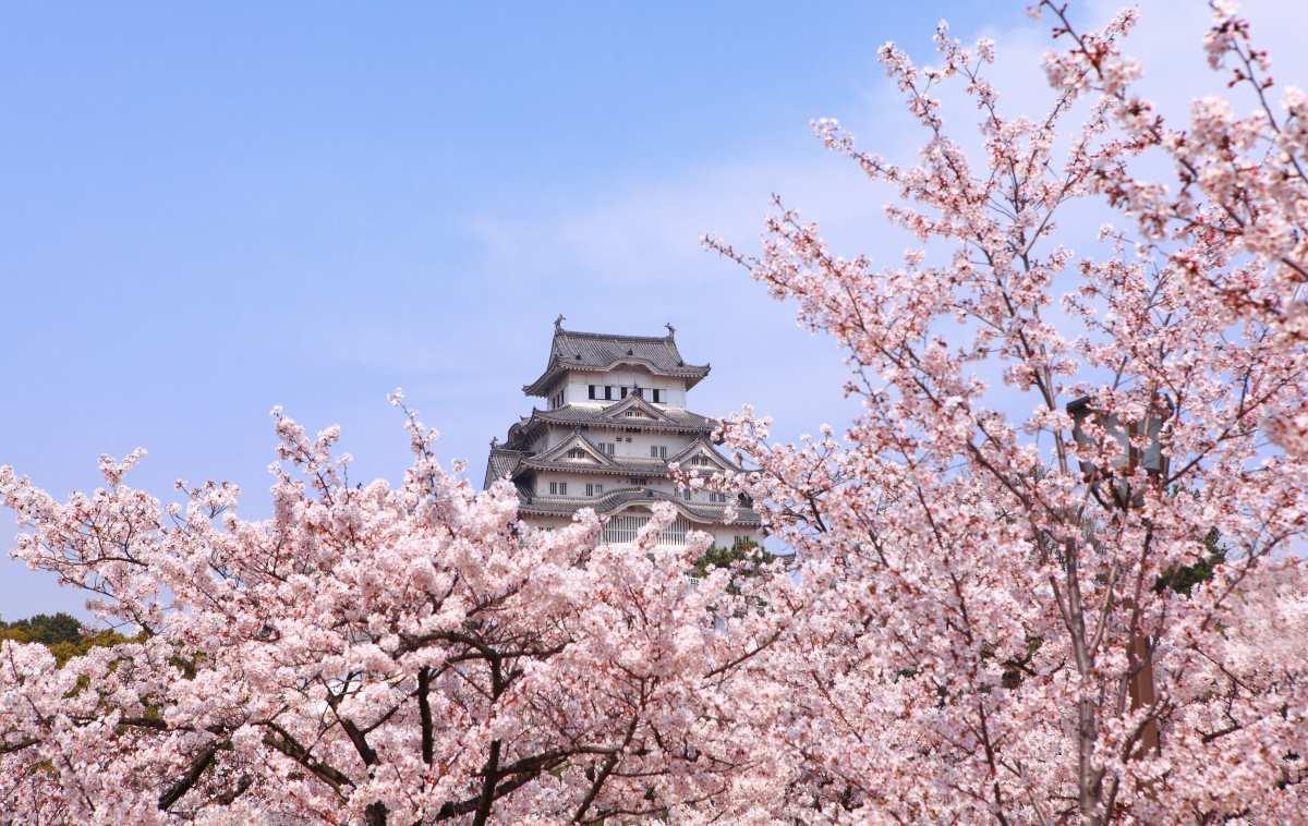 Ανθισμένες κερασιές Κιότο