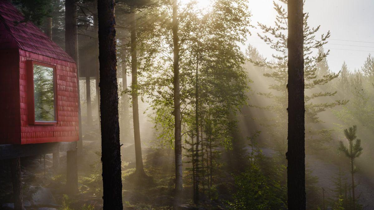 Tree Hotel - Σουηδία